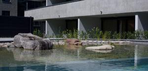 wohnen-dornbirn.at | Schwimmteich für Bewohner und Mieter
